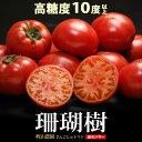 珊瑚樹トマト(約1kg)徳島産 フルーツトマト 糖度10度以上 高糖度 甘い 食品 野菜 きのこ トマト 送料無料