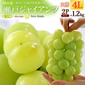瀬戸ジャイアンツ4L×2房(約1.2kg)岡山産 ぶどう 食品 フルーツ 果物 ブドウ 瀬戸ジャイアンツ 送料無料