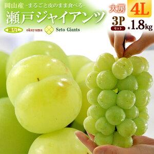 瀬戸ジャイアンツ4L×3房(約1.8kg)岡山産 ぶどう 食品 フルーツ 果物 ブドウ 瀬戸ジャイアンツ 送料無料