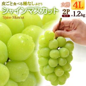 シャインマスカット4L×2房(約1.2kg)産地お任せ 秀品 ぶどう 皮ごと 種無し 食品 フルーツ 果物 ブドウ ギフト 送料無料
