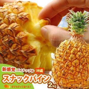 スナックパイン(2kg前後)沖縄産 パイン 食品 フルーツ 果物 パイナップル 高糖度 甘い 送料無料