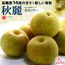 秋麗梨(5-6玉前後/約2kg)熊本産 青梨の新品種 高糖度和梨 食品 フルーツ 果物 和梨 送料無料