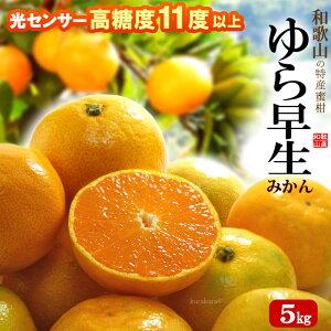 ゆら早生みかん 秀S-M(5kg)和歌山産 由良早生みかん ミカン 食品 フルーツ 果物 みかん 送料無料