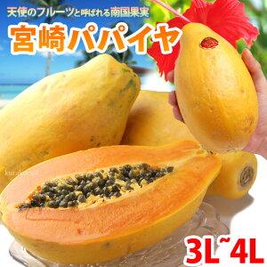 宮崎パパイヤ3L-4L(約2kg)宮崎産 秀品 ギフト 贈答 国産 完熟 パパイア サンライズソロ 食品 フルーツ 果物 パパイヤ 送料無料