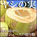 ヤシの実(5玉)フィリピン産 ココナッツ ヤシノミ やしの実 椰子の実 ココヤシ ジュース 送料無料