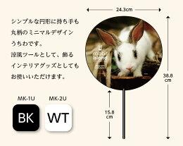 瀬戸内海のうさぎ島(広島)のうさぎを愛する写真家小園久美さん