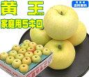 【9月りんご第2弾】【常温便送料無料】黄王 家庭用 5キロ 青森県産酸味が少なく甘味と香りが魅力的!青森県からもぎた…