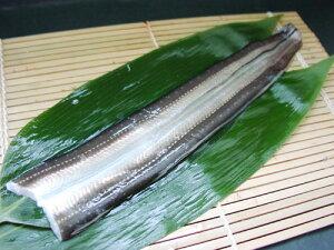 """今の時期に美味しい 対馬産の穴子(割いてお届け) 例年以上に身も厚く脂もあります!ふわっとした食感!天ぷら・煮穴子・白焼きに 豊洲の""""魚のプロ""""が割いてお届けします あなご・ア"""