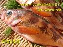 赤めばる(1本・エラと腹を除いたもの・冷蔵)1本約350〜400gの大型の最高品!青森・佐渡の釣り物 春の煮魚の王様 色鮮や…