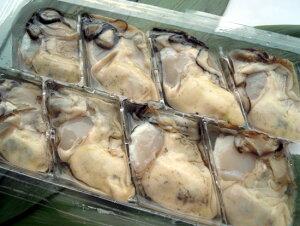 南三陸町のブランド牡蠣「プレミアム生食用牡蠣・お多福」 大粒の牡蠣を選別して殻から外し、トレイに一つずつ並べられています レモンやポン酢で、シングルモルトで!かき・カキ