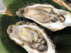 北海道 昆布森漁協 仙鳳趾の殻牡蠣(冷蔵・4個) 強い甘味と濃厚でコクのある味わい。プリプリとふっくらした身が!2021年の出荷予定→10月中旬までです。(かき・カキ)