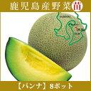 野菜苗! 【苗】 パンナ【メロン】 8本セット (9cmポット) 鹿児島