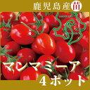 野菜苗!【苗】 マンマミーア【ミニトマト】 4本セット (10.5cmポット) 鹿児島