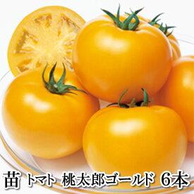野菜苗!【苗】桃太郎ゴールド【トマト】6本セット(10.5cmポット)鹿児島