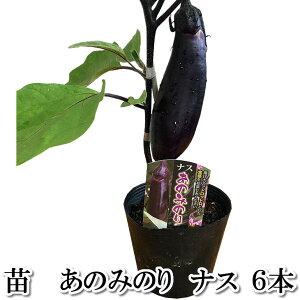 野菜苗 あのみのり 茄子 なす ナス 6本セット 9cmポット