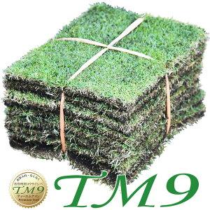 芝生 TM9 1平米 ティーエムナイン 鹿児島産 高麗芝 手入れが楽 簡単で見た目もキレイな芝生 楽天市場芝生ジャンル連続1位獲得 やっぱり人工芝より天然芝 ガーデニング DIY 美景観 省管理 少な