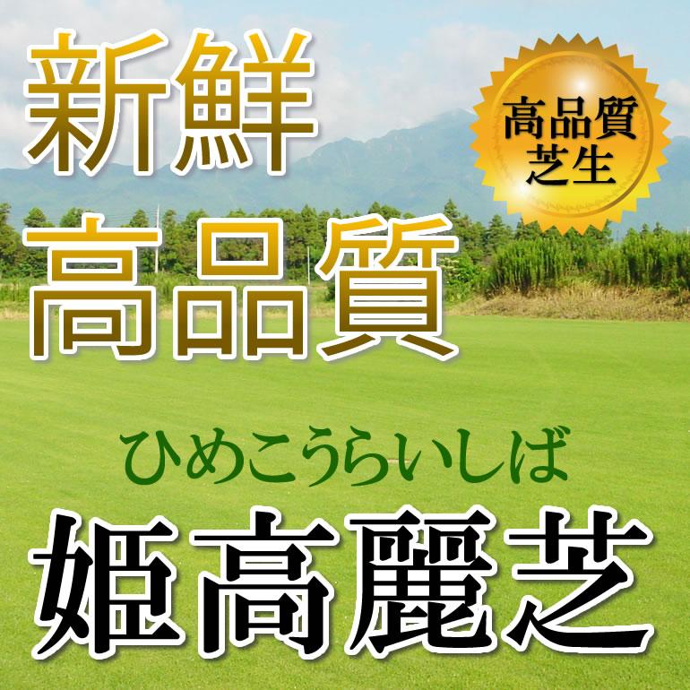 芝生 姫高麗芝 1平米 鹿児島産