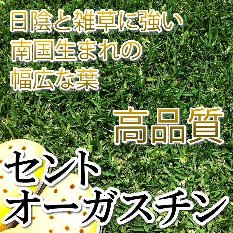 芝生 セントオーガスチン 1平米 鹿児島産【店頭受取対応商品】