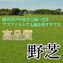 芝生!野芝 (日本芝) 1平米 環境適応能力の高い芝生 やっぱり人工芝より天然芝!ガーデニングDIY
