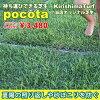 可擕式草坪 pocota (波科特)︰ 霧島草坪屋頂和門廊和混凝土灰塵保護熱保護 1 容器︰ 0.45 m 我人工草皮比天然草皮。