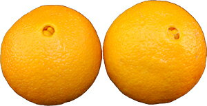 オレンジ 2玉 【アメリカ・南アフリカ・オーストラリア】