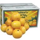 【箱売り】グレープフルーツ ルビー 36玉〜48玉 [フロリダ・南アフリカ・オーストラリア] 【業務用・大量販売】【…