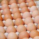 【箱売り】 輝黄卵 (玉子・たまご・卵・タマゴ) 1箱 福岡産・九州産(10kg、Mサイズ、約150〜160玉)九州 たま…