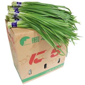 【箱売り】 にら(ニラ) 1箱(50束入り/約5kg) 福岡・大分・宮崎産 【業務用・大量販売】【RCP】