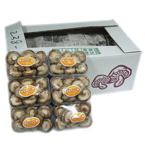 【箱売り】 椎茸(しいたけ) 1箱(100g×40パック/約4kg) 九州産  【業務用・大量販売】【RCP】