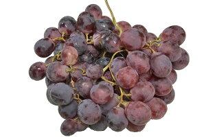 レッドグローブ1kg(チリ産・アメリカ産) ぶどう・ブドウ・葡萄・RedGlobe