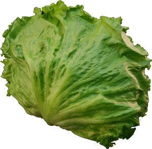 レタス(れたす) シャキシャキ食感が魅力! サラダ野菜!! 1玉 【長野・群馬産】