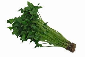九州産 みつば(三つ葉・ミツバ) 1束 香りが命!  九州の安心・安全な野菜! 【福岡・九州】