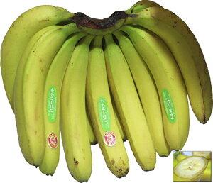送料無料!!【バナナ】 ハニーバナナ 1房(約2.2kg) エクアドル産 スムージーにピッタリ! 【RCP】