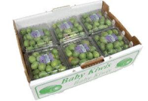 【箱売り】 ベビーキウイ(キウイフルーツ・キウイ) 1箱(12パック×120g) チリ・アメリカ・ニュージーランド産 【業務用・大量販売】 baby kiwis(kiwiberry) 【RCP】