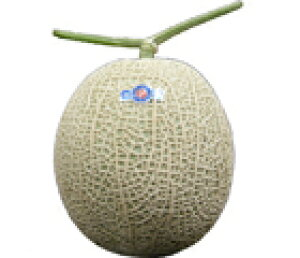 九州産 アールスメロン(メロン) 1玉 九州の安心・安全な果物! 熊本・宮崎産・長崎【九州産】
