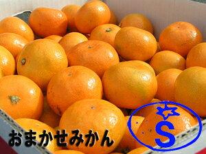 【みかん】 店長おまかせ!九州産みかん S〜Lサイズ 1箱(約5kg)【RCP】