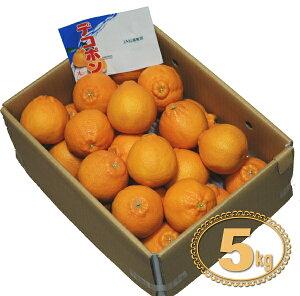 【柑橘】 デコポン(でこぽん) 1箱(約5kg) 九州・佐賀県松浦東部産 【RCP】