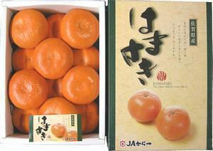 九州産 はまさき 12玉 2,5kg! 清見オレンジ・アンコール・マーコットを掛け合わせたグルメみかん。 九州の安心・安全な果物! 九州・唐津産 【RCP】