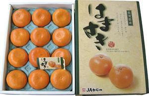 九州産 はまさき  12玉  3kg!  清見オレンジ・アンコール・マーコットを掛け合わせたグルメみかん。 九州の安心・安全な果物! 九州・唐津産 【RCP】