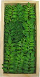 木の芽(きのめ・山椒の葉) 1パック 国産