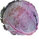 レッドキャベツ(紫キャベツ・赤キャベツ・きゃべつ) 1玉 【鹿児島・熊本・佐賀・長野・岡山産】 サラダに入れる…
