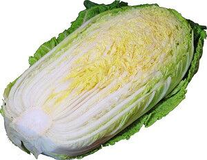 白菜(はくさい) 1/2カット 九州・大分・福岡・熊本産