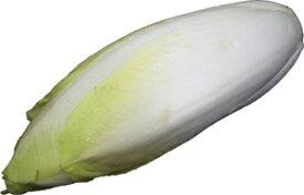 食欲を刺激する! アンディーブ(チコリ) ベルギー産 1玉 約120g