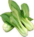 九州産 チンゲン菜(青梗菜・チンゲンサイ) 油炒めで栄養の吸収率がアップ! 1袋 九州の安心・安全な野菜! 【…