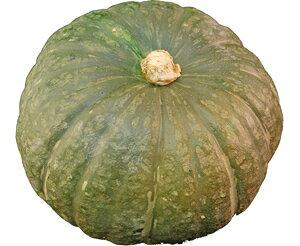 とても栄養価の高い野菜! かぼちゃ(カボチャ・南瓜)1玉 【ニュージー・メキシコ・トンガ・ニューカレドニア】