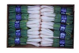 エシャレット 1箱(1袋約100g×10袋)