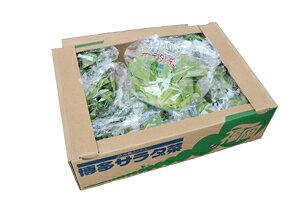 九州産 サラダ菜(バターヘッド) 1箱 【福岡産】