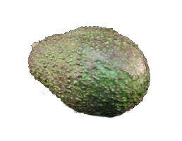 アボカド(アボガド・アバカテ・バターフルーツ・ワニナシ) 1玉 メキシコ産 血液をサラサラにする効果がある植物油を含んでるんです。