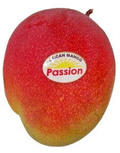 アップルマンゴー(マンゴー) 1玉  約300g  【RCP】 【輸入(ペルー・メキシコ・ブラジル)】