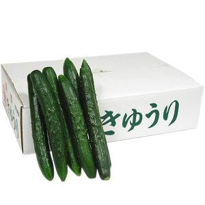 【箱売り】 胡瓜(きゅうり) Mサイズ 1箱(約45本入/約5kg) 【業務用・大量販売】【RCP】